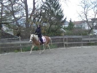 Eine Kundin fragte mich um Hilfe mit ihrem jungen Pferd Melina